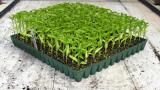 Benefits Of Using Plant Seedling Tray