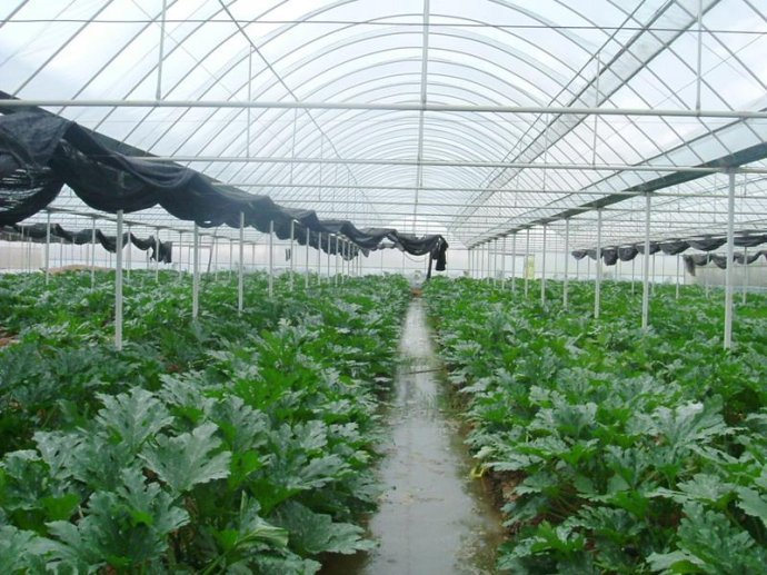 How To Plant Greenhouse Vegetables In Autumn And Winter?