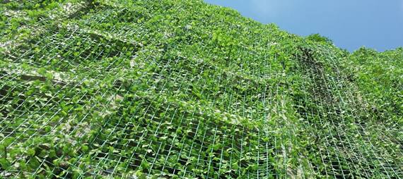 How Plant Support Netting Supports Plants Climbing In Vertical Planting Engineering Projects?