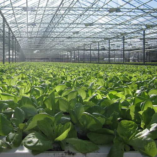 Carbon Dioxide Fertilization Technology Application In Greenhouse Vegetable Production