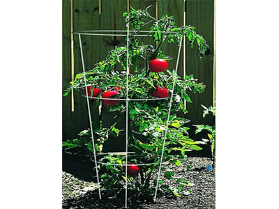 11-tomato-plant-supports-1