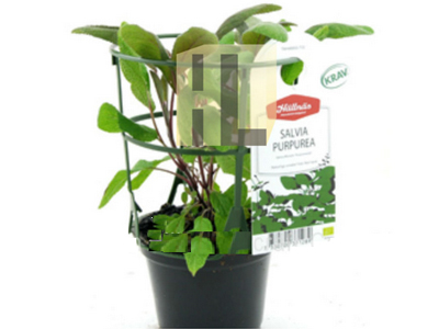 39-plant-labels-with-print-4