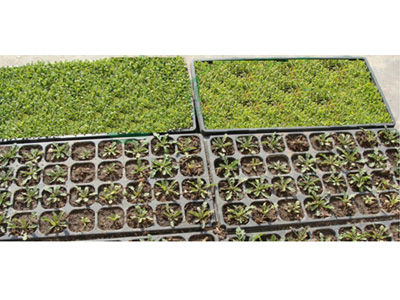 47-seedling-trays-3
