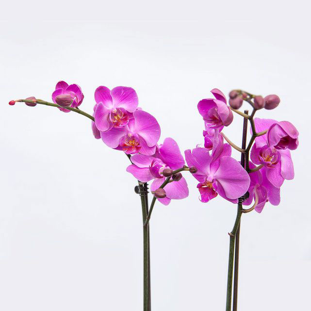 how-to-care-for-an-orchid-plant-1