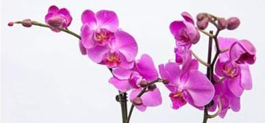 Some Tips For Growing Orchid: How To Care For An Orchid Plant